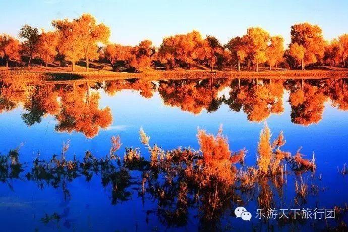 青海格尔木胡杨林将沙漠染成金黄色 苍凉的壮美