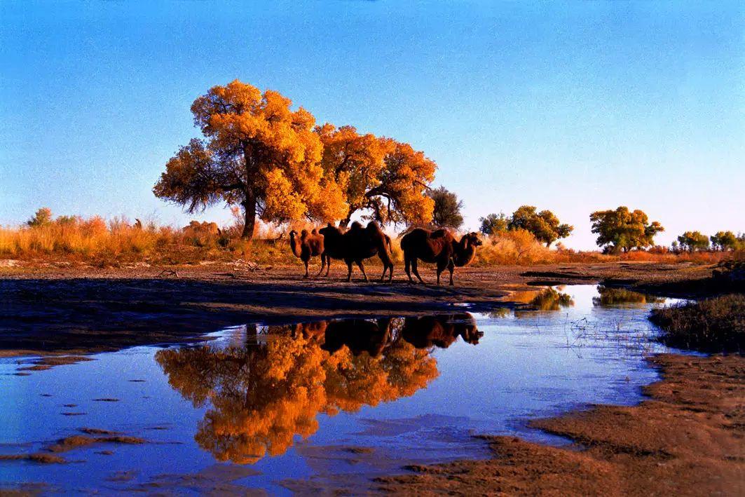 新疆最美的四大胡杨林,是这个秋天最震撼人心的颜色