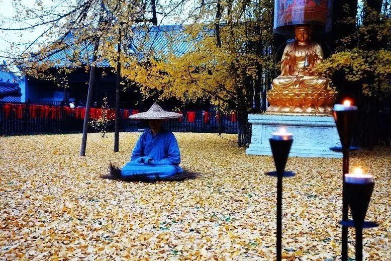 在李世民栽的银杏树下,做了个金黄的茶会