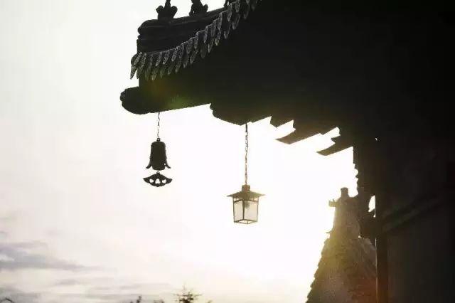 李世民所栽的千年银杏走红网络